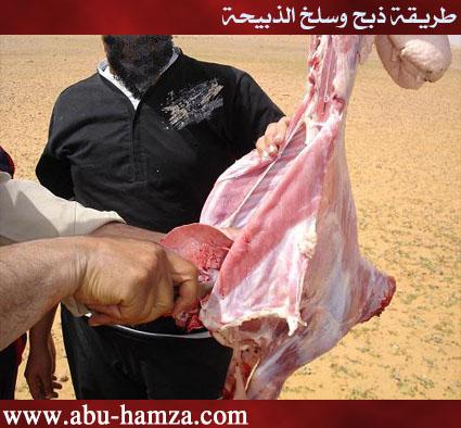 الطريقة الصحيحة فى ذبح ماشية 22.jpg
