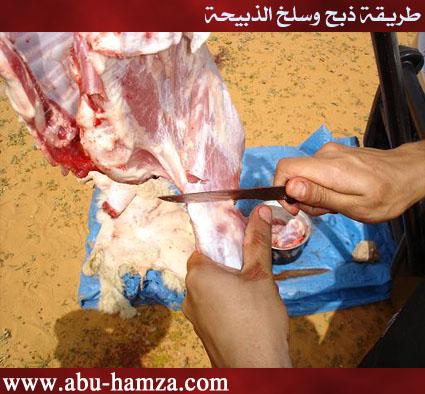 الطريقة الصحيحة فى ذبح ماشية 23.jpg
