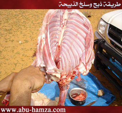 الطريقة الصحيحة فى ذبح ماشية 24.jpg
